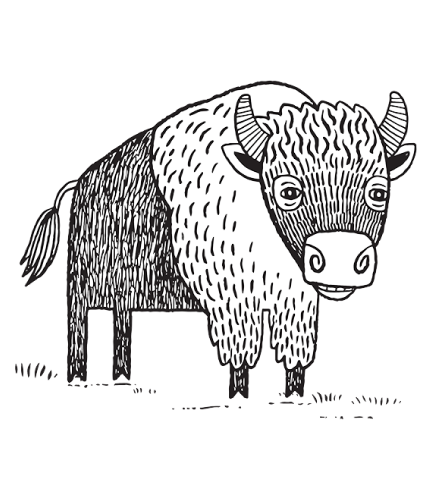 Download Buffalo Drawing