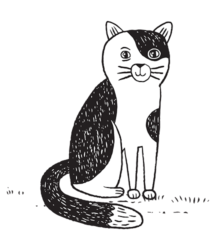 Download Cat Drawing