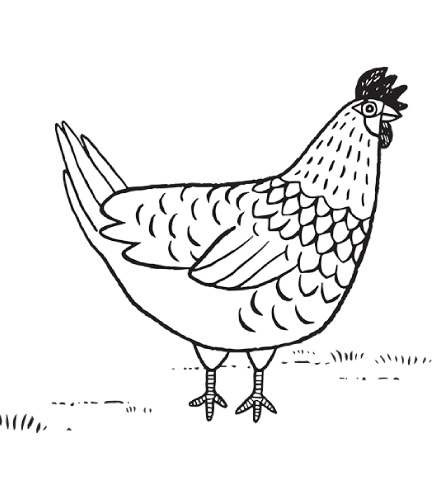 Download Chicken Drawing